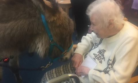 Audrey's face lit up when she saw her wish - a donkey!
