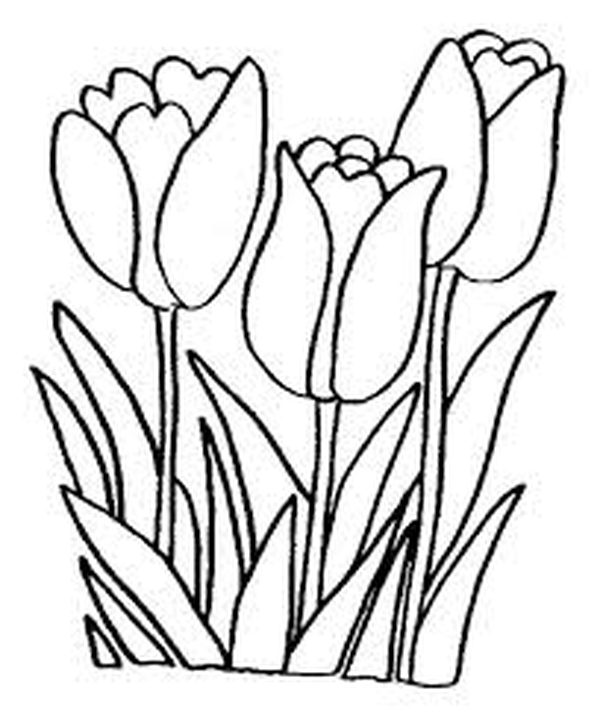 Picture of some tulips